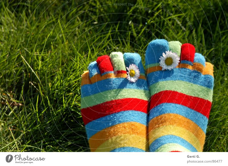 %.{& Stockings Striped socks Multicoloured Spring Daisy Yellow Grass Meadow Toes Spring fever Sunlight Juicy Joy Summer toe socks vernally Beautiful weather