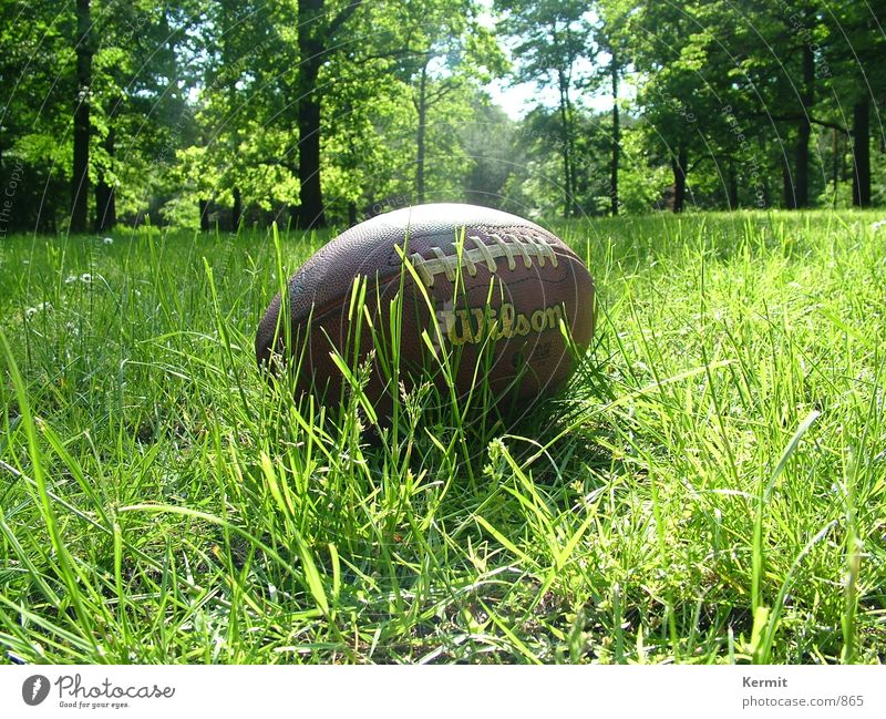 Football after Touchdown American Football Meadow Tree Leisure and hobbies football Close-up Wilson leather ball