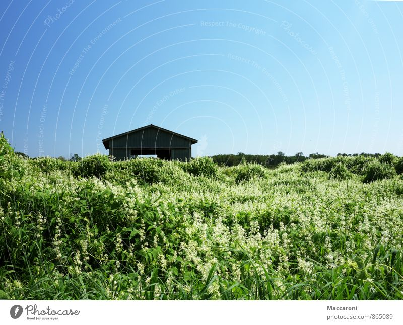 Nature Old Plant Summer Relaxation Flower Landscape House (Residential Structure) Environment Meadow Field Growth Bushes Climate Beautiful weather Blossoming