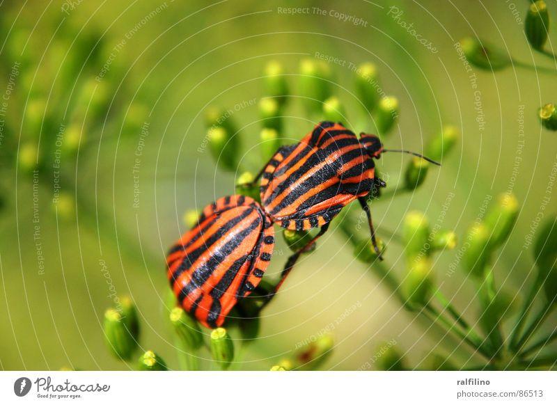 Loving Bugs Animal Flower Population Spring Beetle Nature Emotions
