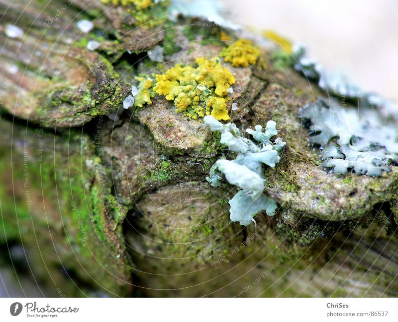 Lichens and moss Plant Wood Small Damp Wet Macro (Extreme close-up) Tree trunk Trailing plant Crawl Yellow Gray Volcanic crater Blossom Close-up Garden Park
