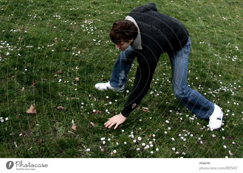 acrobatic maximum performance with flowers Lift Meadow Green Goose Daisy Spring March April May Blossom Flower Flower meadow Alpine pasture Grass Caresses