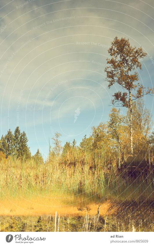 Sky Nature Plant Tree Landscape Leaf Clouds Animal Forest Environment Autumn Grass Happy Lake Horizon Dream