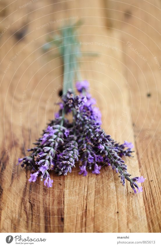 LavenderFragrance Nature Plant Flower Garden Violet Odor Wooden table Rustic Vintage Blossom Summery Gardening Colour photo Interior shot Close-up Detail