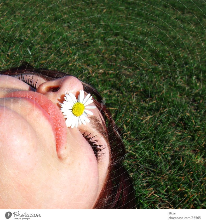 Summer! Spring Sunlight Daisy Yellow Flower Lips Chin Closed Nostril Tip of the nose Meadow Park Grass Sneezing Titillation Lie Sunbathing Woman Closed eyes