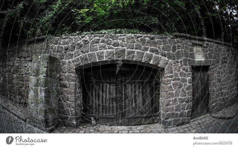 Old City Tree Dark Gate Outskirts