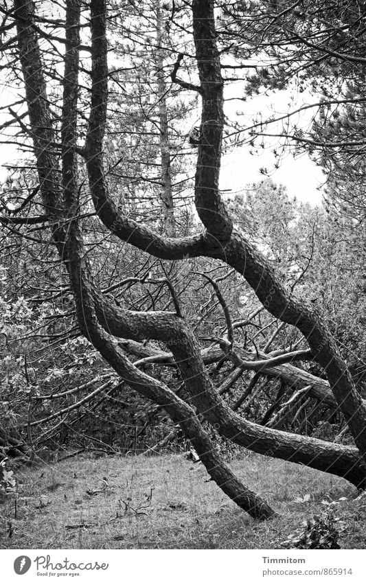 Nature Plant White Tree Black Dark Forest Environment Movement Emotions Natural Gray Wood Tree trunk Aggression Fight
