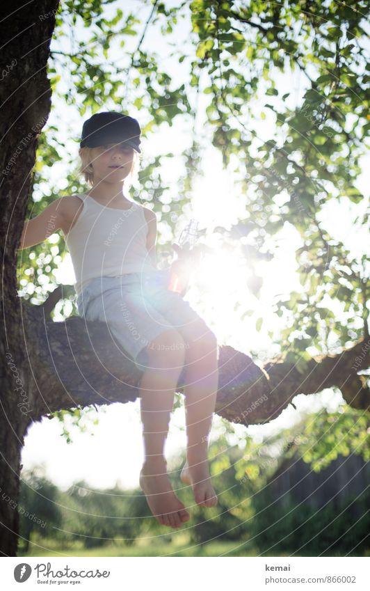 summer child Climbing Adventure Human being Masculine Boy (child) Infancy Life Body 1 3 - 8 years Child Nature Sunlight Summer Beautiful weather Tree Leaf