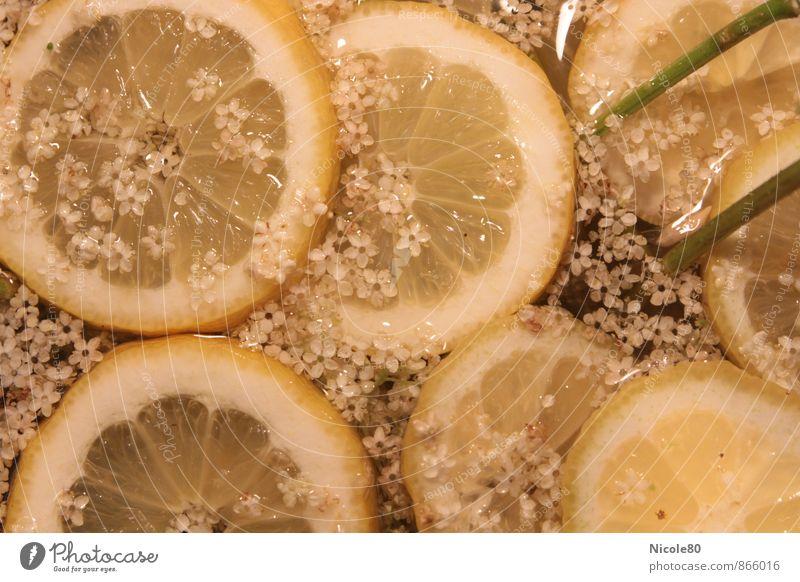 Elderflower with lemons Cold drink Lemonade Longdrink Cocktail Fresh Sour Syrup hugo Colour photo Interior shot Deserted