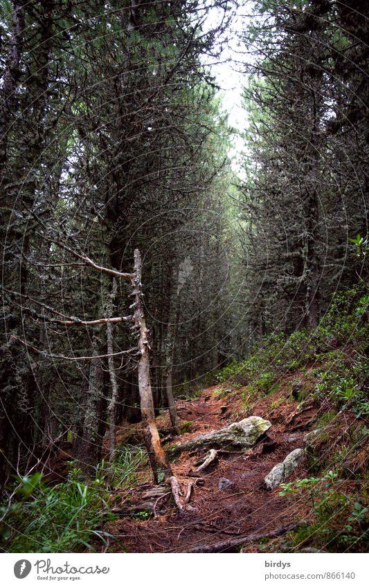 Waldwichtelpfad Nature Summer Autumn Larch Root Log Lichen Forest Lanes & trails Exotic Natural Wild Calm Idyll Sustainability Change Mountain forest