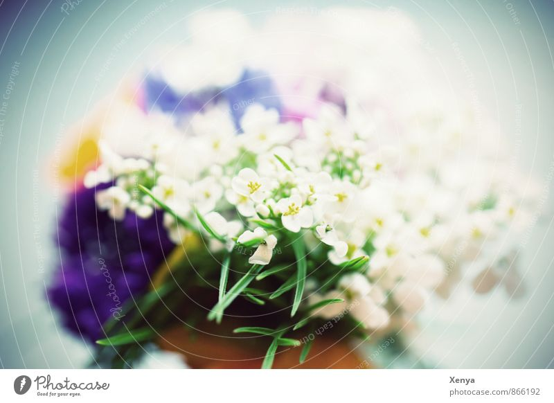 for you Plant Flower Blue Green White Romance Bouquet Blossom Gift Mother's Day Close-up Deserted Blur