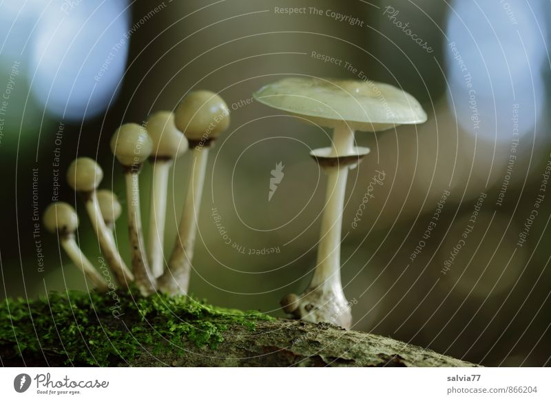 group photo Environment Nature Plant Earth Autumn Moss Mushroom Forest Touch Stand Growth Dark Thin Disgust Small Natural Slimy Under Soft Blue Brown Gray Green