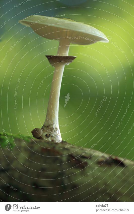 Mushroom Model Environment Nature Plant Earth Summer Autumn Moss Wild plant Mushroom cap Forest To enjoy Stand Growth Dark Thin Simple Elegant Small Delicious