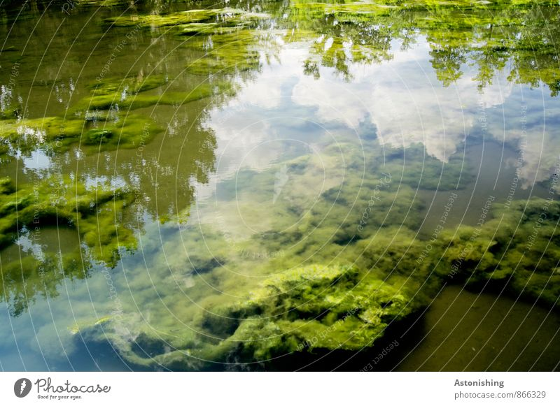 algae Environment Nature Landscape Plant Water Sky Clouds Summer Weather Beautiful weather Pond Bright Blue Green White Algae Reflection Soft Colour photo