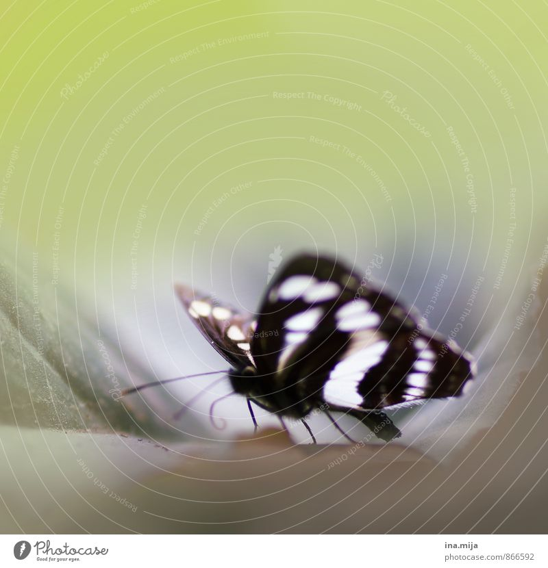 little butterfly Environment Nature Animal Spring Summer Garden Park Wild animal Butterfly Wing Insect 1 Life Delicate Light green Black & white photo