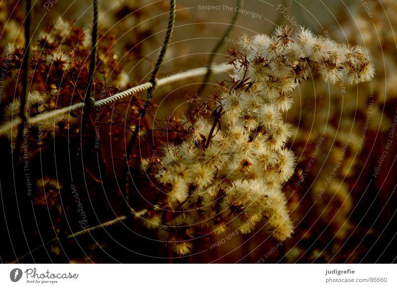 Net and grass Grass Yellow Stalk Blade of grass Ear of corn Glittering Beautiful Soft Meadow Delicate Flexible Sensitive Pennate Sporting grounds Loop Autumn
