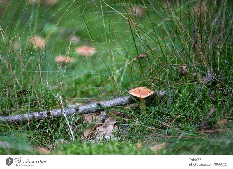 Nature Plant Autumn Meadow Family & Relations Field Esthetic Mushroom