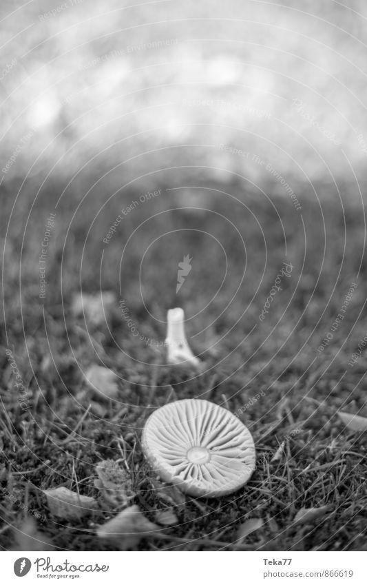 Nature Plant Forest Autumn Meadow Exceptional Authentic Athletic Mushroom Autumnal Mushroom cap