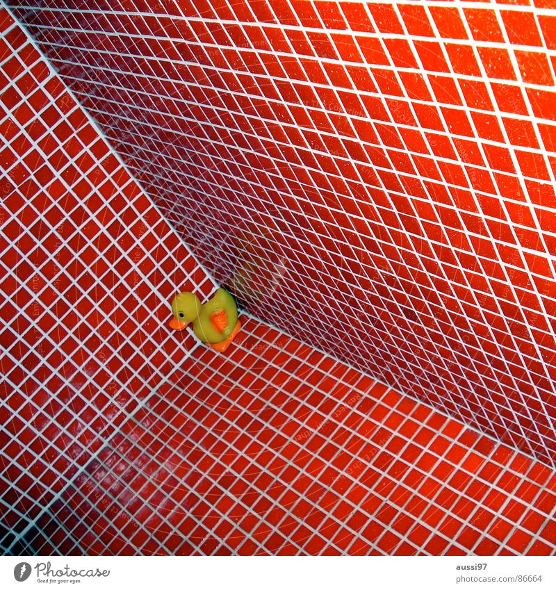 Q.-e. I love you! Red Bathroom Squeak duck Drake Corner Swimming pool Cubism Downward Duck Tile Perspective cuboid Vertigo slide down