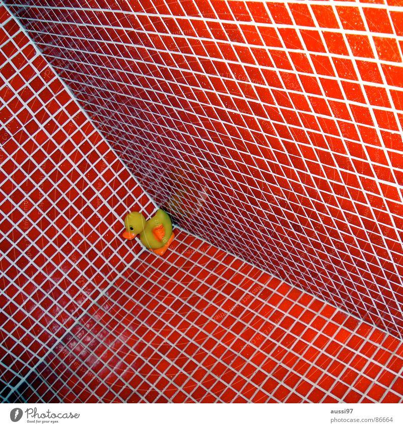 Red Perspective Corner Bathroom Swimming pool Tile Duck Downward Vertigo Squeak duck Drake Cubism