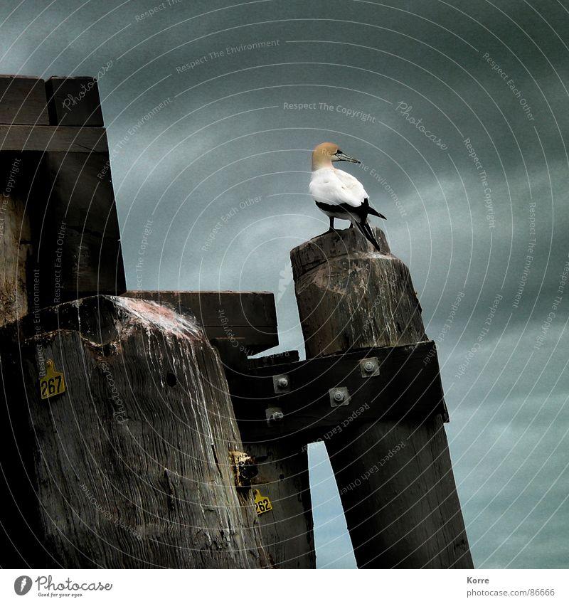 Sky Ocean Loneliness Wood Moody Lake Bird Storm Australia Remote Outpost