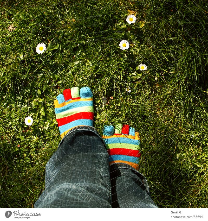 Woman Joy Yellow Meadow Grass Spring Feet Legs Going Jeans Lawn Stockings Beautiful weather Daisy Toes Striped