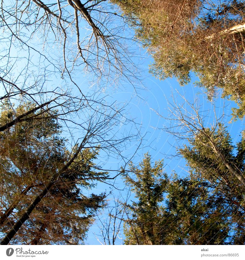 Sky Forest Line Perspective Geometry Paradise Clearing Site Sky blue Deciduous tree Coniferous trees Coniferous forest Glade Canopy (sky) Firmament District