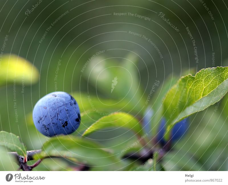 Nature Blue Plant Green Summer Leaf Environment Life Natural Gray Small Brown Growth Fruit Bushes Fresh