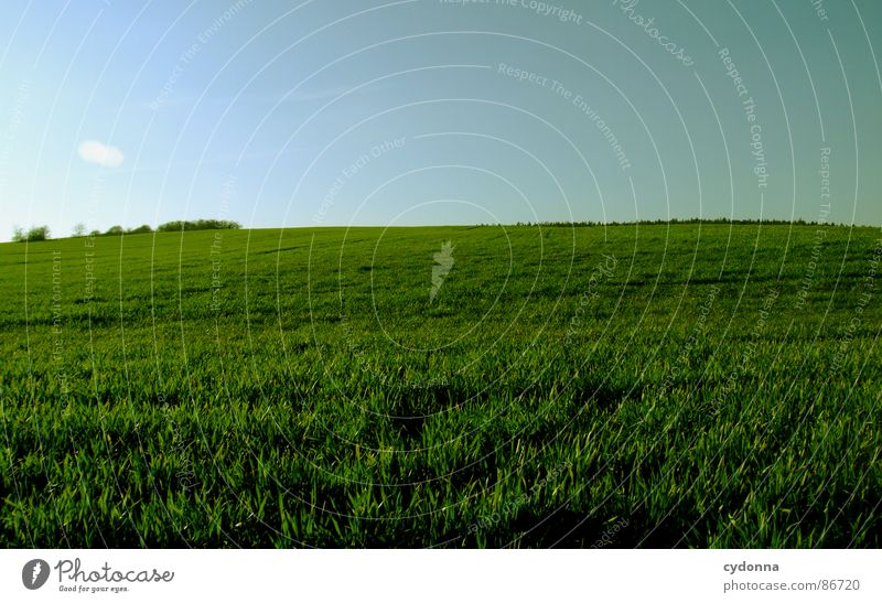 Green is the Colour Grass Meadow Field Far-off places Large Extensive Equal Minimalistic Clean Free Possible Spring Horizon Wake up Growth Sky Earth Sand Nature