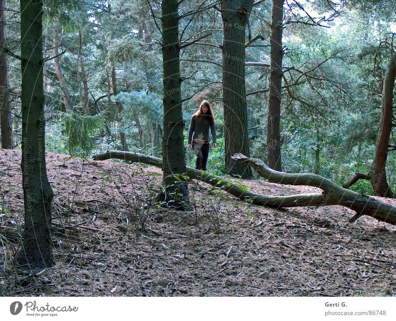 Woman Nature Green Loneliness Forest Brown Hiking Going Bushes To go for a walk Branch Fir tree Tree trunk Long-haired Clearing Heathland