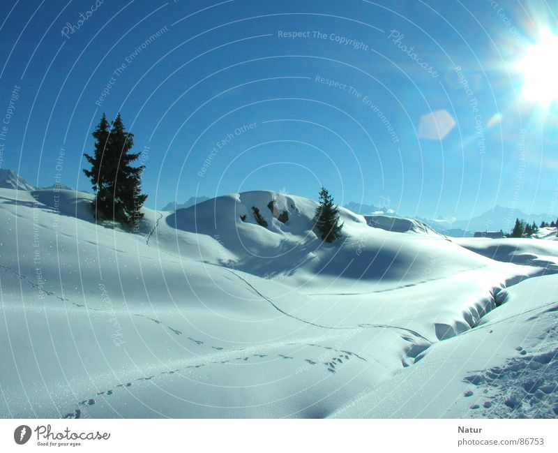 Nature Beautiful Sun Winter Mountain Snow Idyll Beautiful weather Esthetic Cloudless sky Switzerland Landscape Picturesque Snowscape Blue sky Lens flare