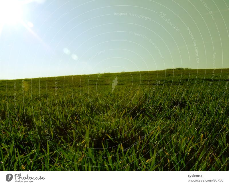 Green is the Colour I Grass Meadow Field Far-off places Large Extensive Equal Minimalistic Clean Free Possible Spring Horizon Wake up Growth Sky Nature