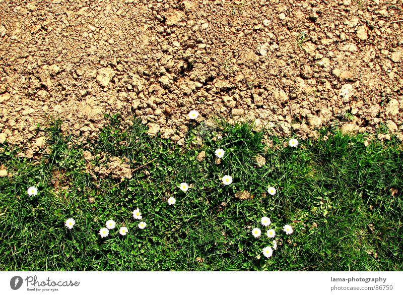 Green Summer Flower Joy Spring Meadow Lanes & trails Stone Brown Line Sand Jump Field Earth Footpath Hope