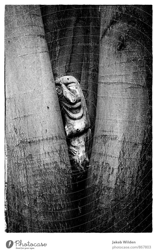 A little man stands in the forest Nature Plant Tree Park Forest Wood Sign Idyll Black & white photo Exterior shot Experimental Abstract Structures and shapes