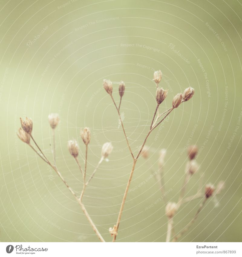 delicate spinning Environment Nature Landscape Plant Summer Autumn Grass Garden Meadow Field Natural Dry Brown Green Roadside Spider's web Spun Delicate