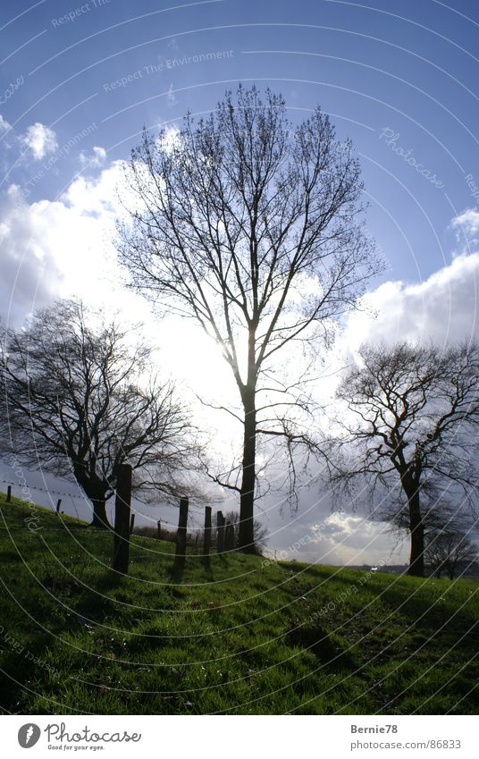 3 trees Meadow Fence Field Sunlight Spring Grass Clouds Glade Sky Nature Pasture