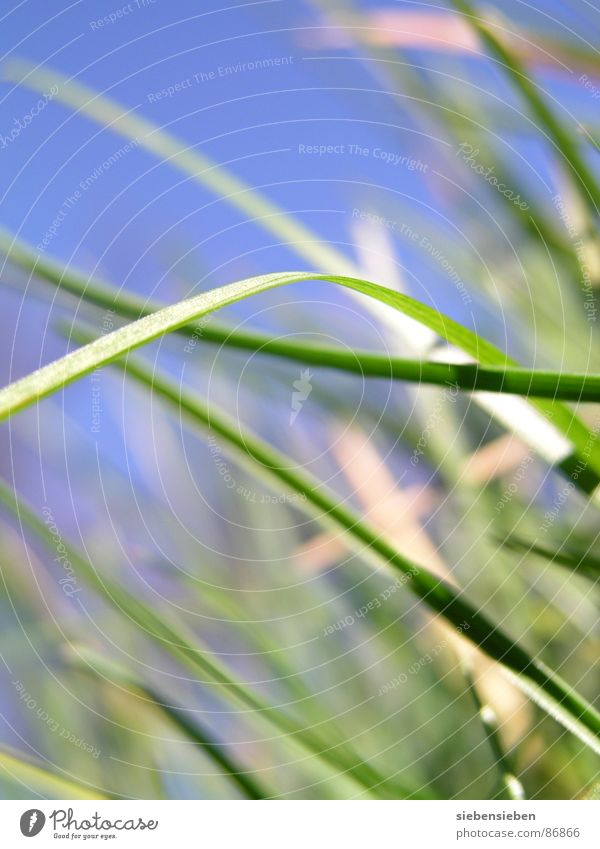 beetle perspective Grass Green Growth Meadow Fresh Blade of grass Blossoming Seasons Summer Spring Close-up Force Perspective Natural phenomenon Knoll