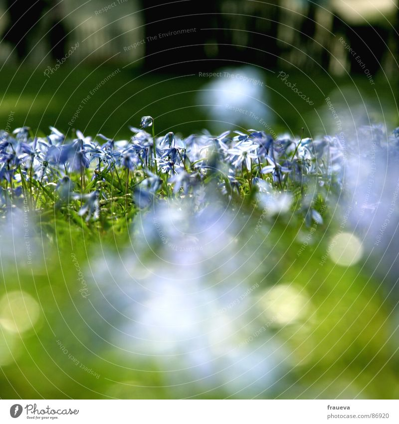 Nature Green Plant Sun Flower Meadow Spring Garden Park Glittering Lawn Violet Biology Clearing Verdant Shaft of light