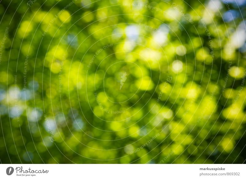green bokeh Environment Nature Landscape Plant Animal Sun Spring Summer Weather Beautiful weather Tree Leaf Blossom Park Green Blur To dry up Growth