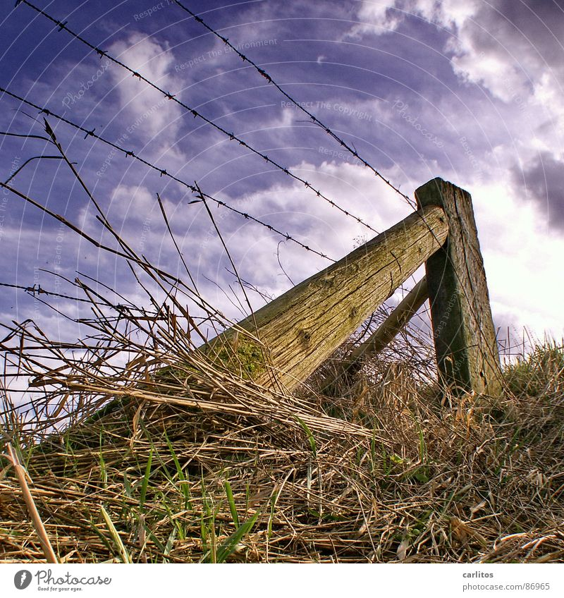 In March the farmer ... Spring Plant Field Pasture fence Diagonal Wire Barbed wire Fence Worm's-eye view Grass Looking Border Edge Green Clouds outrigger Upward