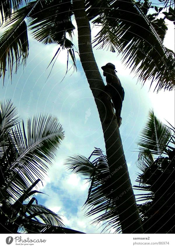 palm climber Palm tree Bali Summer Vacation & Travel Clouds Beach Indonesia Asia Sky