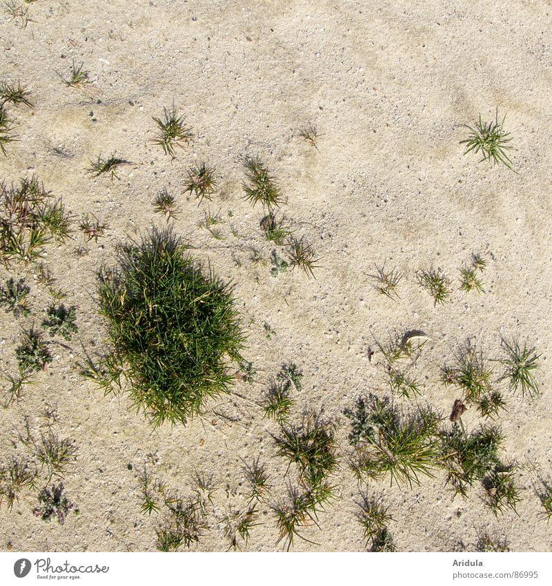 Nature Green Beach Grass Stone Coast Island Lawn Floor covering Desert Blade of grass Beige Minerals Grit