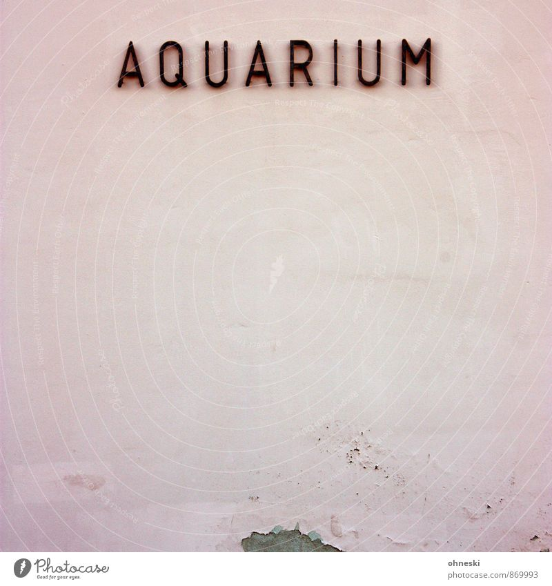 humpbacked whale Fishkeeping Aquarium House (Residential Structure) Wall (barrier) Wall (building) Facade Plaster Characters Pink Town Typography Colour photo