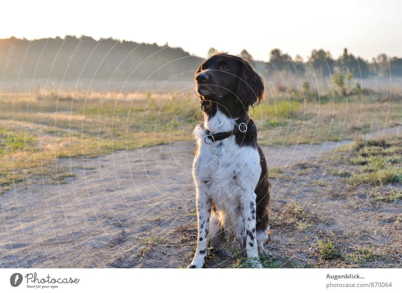 early in the morning Animal Dog 1 Movement Walking Playing Happiness Fresh Natural Joy Happy Contentment Joie de vivre (Vitality) Power Loyal Dependability