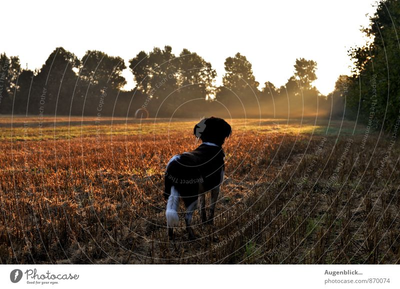 early in the morning two Animal Dog 1 Observe Think Dream Wait Friendliness Happiness Happy Natural Loyal Friendship Love of animals Attentive Watchfulness