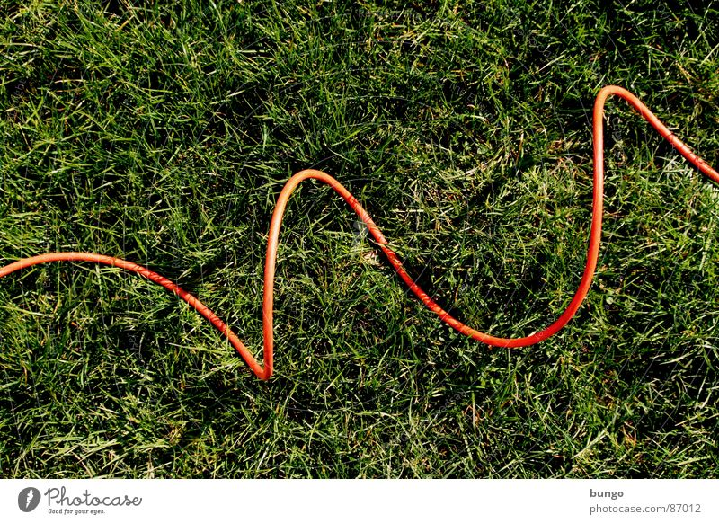 Grass under cable Cable Meadow Summer Spring Blade of grass Subsoil Electricity Arches National Park Jump Connection Communicate bow attach blades of grass Line