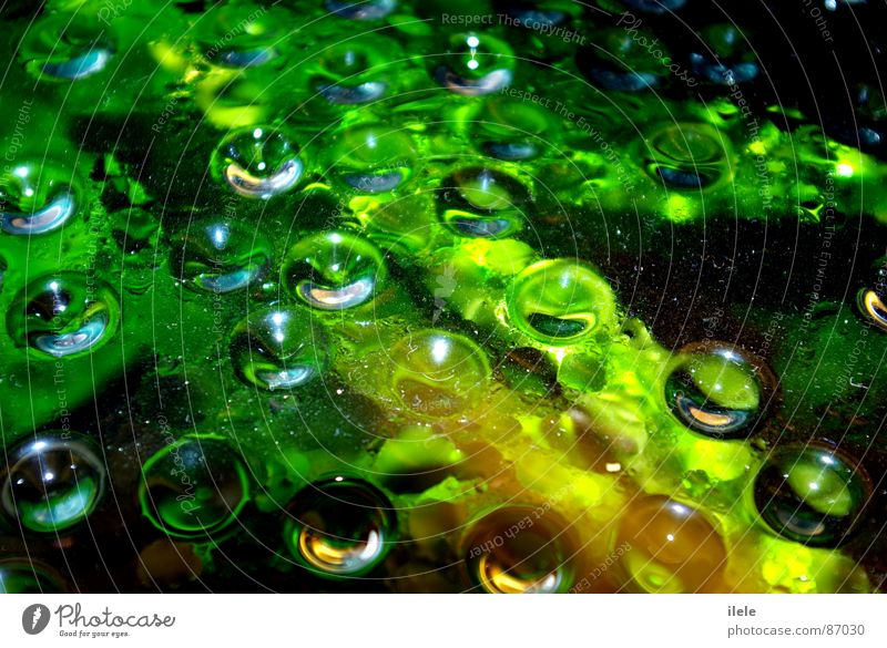 above the water...~nanana~ Wet Green Brisk Wonder Beautiful Aquarium Bright green Water Mineral water Environment Attractive Heavenly Damp Electricity Aquatic