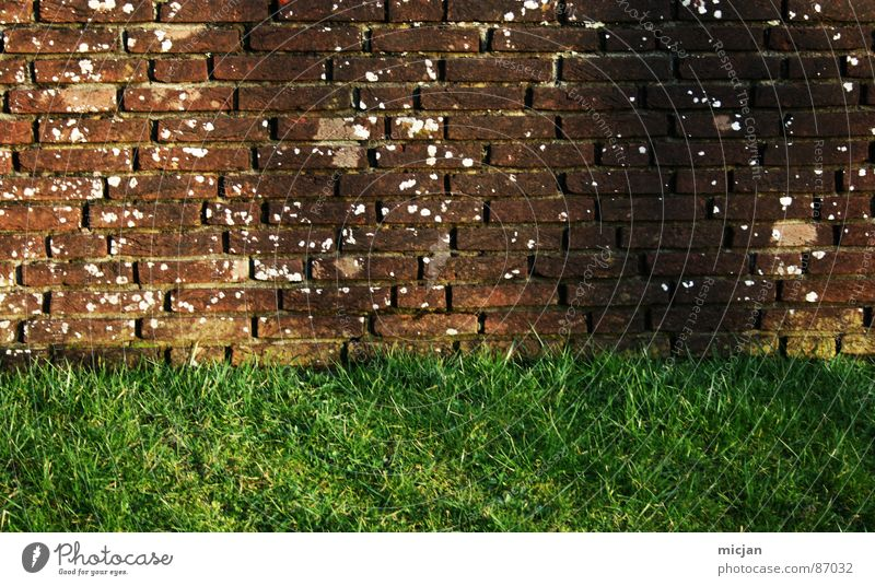 Nature White Green Sun Colour Environment Meadow Grass Wall (barrier) 2 Brown Field Wild animal Dirty Places Construction site