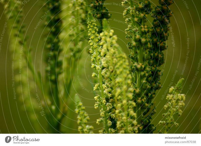Nature Green Summer Plant Environment Meadow Blossom Pasture Environmental protection Botany Wild plant Splendid