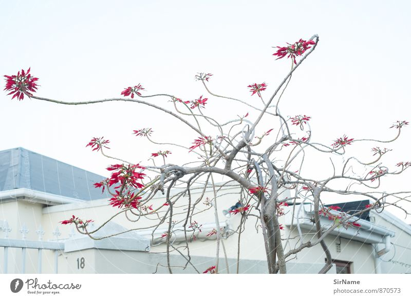 274 [Line music] Environment Nature Plant Cloudless sky Tree Blossom Exotic Branch Garden Park House (Residential Structure) Building Wall (barrier)